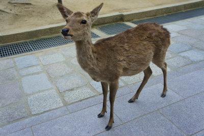 奈良の鹿ちゃん