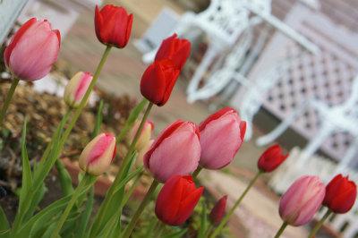 2016赤とピンク