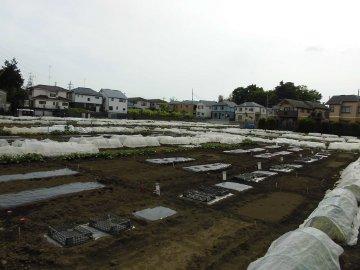 加藤農園3