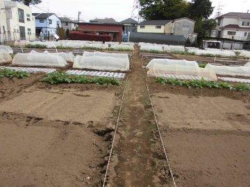加藤農園4