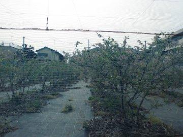 加藤農園10