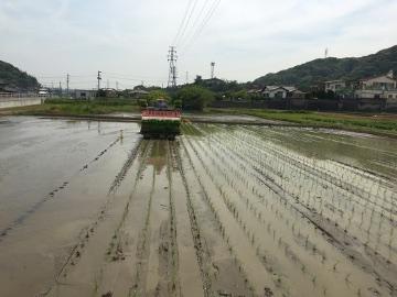 有機米田植え28年8
