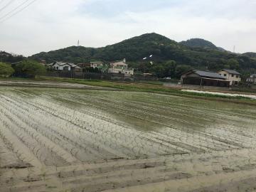 有機米田植え28年9
