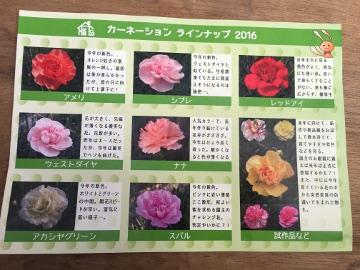 カーネーションと野菜苗植え3