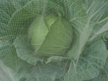 野菜が次々収穫時期5