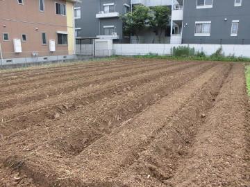 宮ノ下収穫と準備4