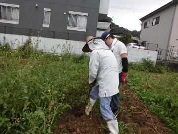 さつま芋植え残りとじゃが芋掘り5