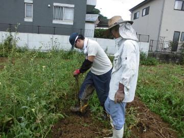 さつま芋植え残りとじゃが芋掘り6