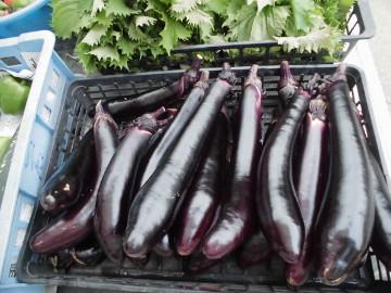 野菜採りとカナブン2