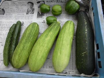野菜採りとカナブン3