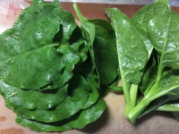 野菜採りとカナブン4