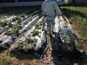 墓掃除と畑の水やり4