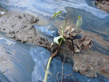 墓掃除と畑の水やり11