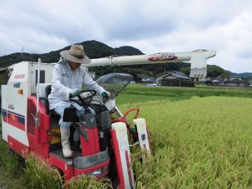 有機米稲刈り28年