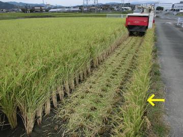 有機米稲刈り28年2