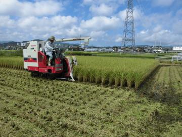 有機米稲刈り28年3