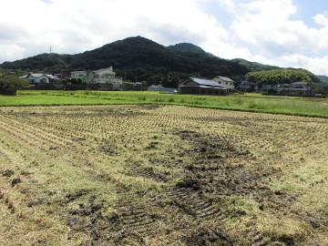 有機米稲刈り28年7