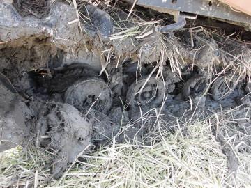 有機米稲刈り28年8