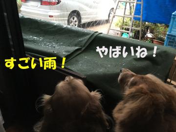 いきなり大雨洪水警報5