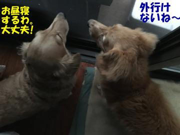 いきなり大雨洪水警報6