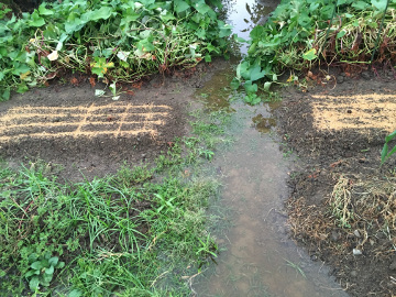 いきなり大雨洪水警報9
