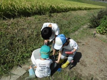 稲刈り終了28年