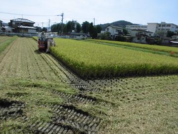 稲刈り終了28年6