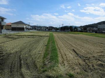 稲刈り終了28年12