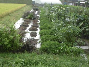 農園が浸かってしまった2