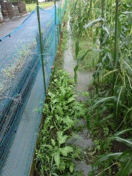 農園が浸かってしまった5
