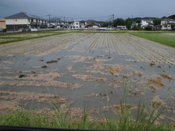 農園が浸かってしまった7