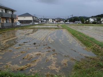 農園が浸かってしまった8
