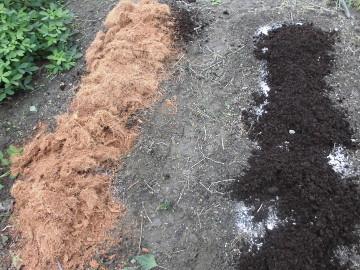苗植え途中で雨