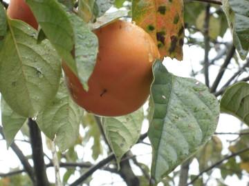 苗植え途中で雨12