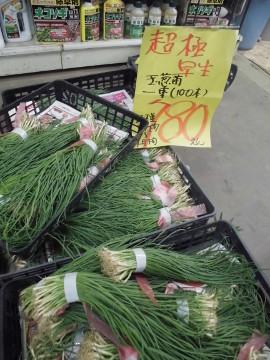 玉ねぎ苗を買いに