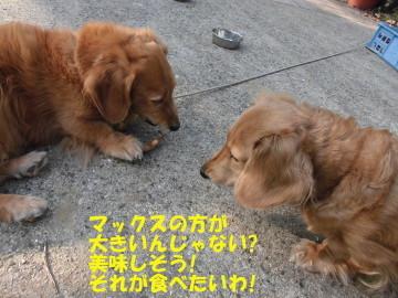人参にヨトウムシ6