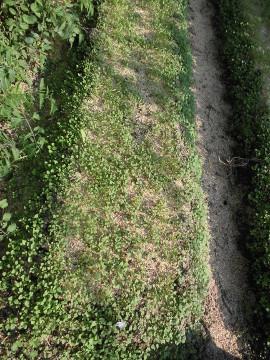 カメムシに、雑草に。2