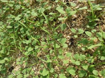 カメムシに、雑草に。4