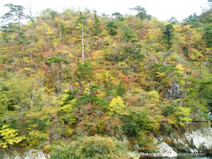 夏井川渓谷-13