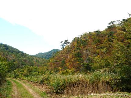 夏井川渓谷17