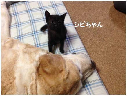 ちっちゃいお手てで猫パンチ?