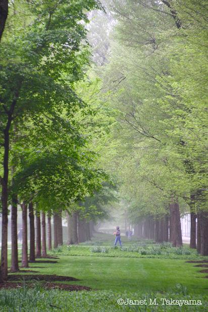 greeng1.jpg