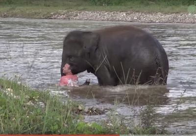Elephant Come To Rescue People