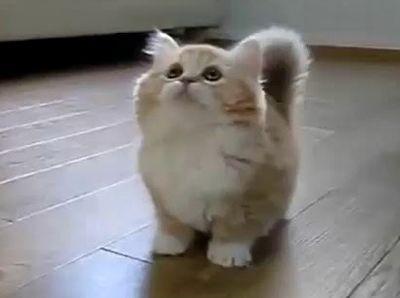 【癒し】超かわいい子猫の動画集