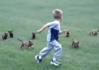 Puppy Gang Chases Kid