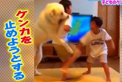 子どものケンカを止める巨大犬