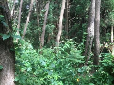 自然地形を利用した外堀