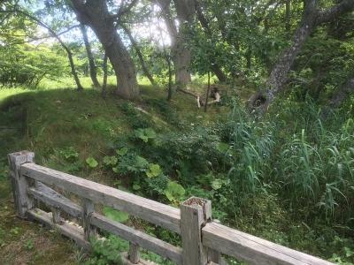 内郭北門西側の土塁および空堀