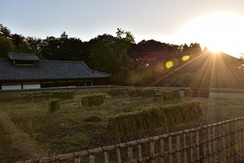 供田の夕陽