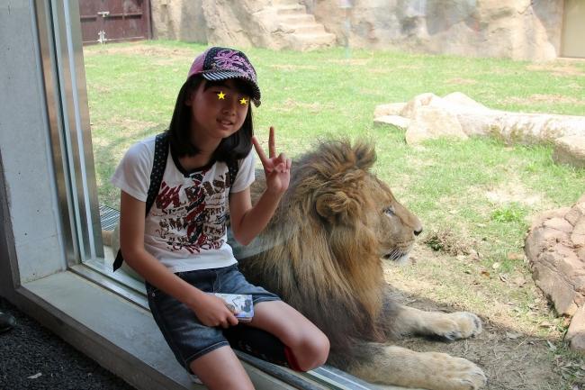 ライオン (5)